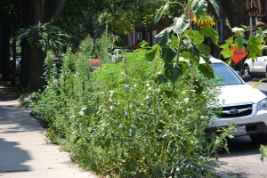 "Jim's neighbor's ridiculous, weed-choked ""garden"""